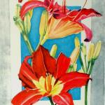 Illustrated Daylilies